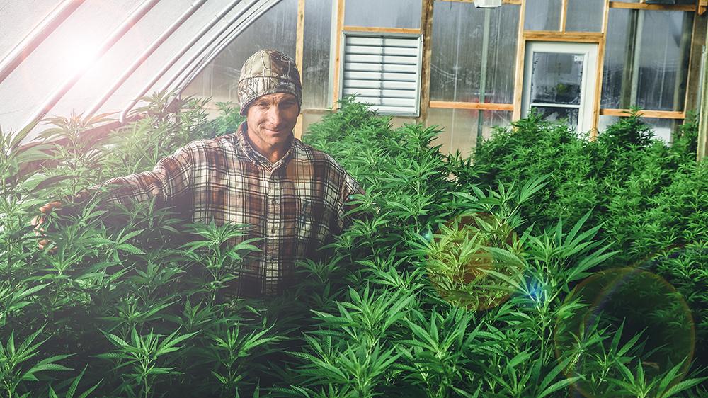 Hemp is Legal - 2018 Farm Bill