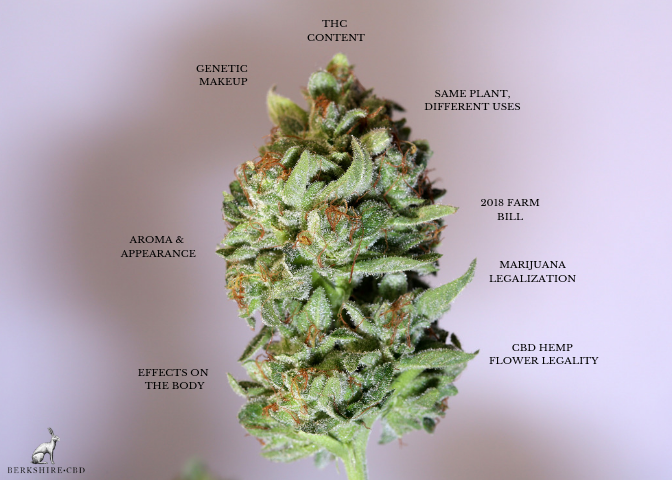 THC-CBD-difference.png