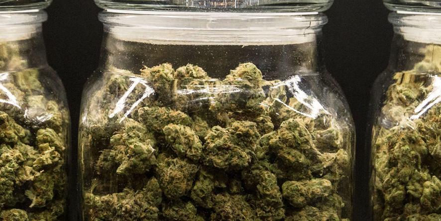 Berkshire - Best Storage for Cannabis