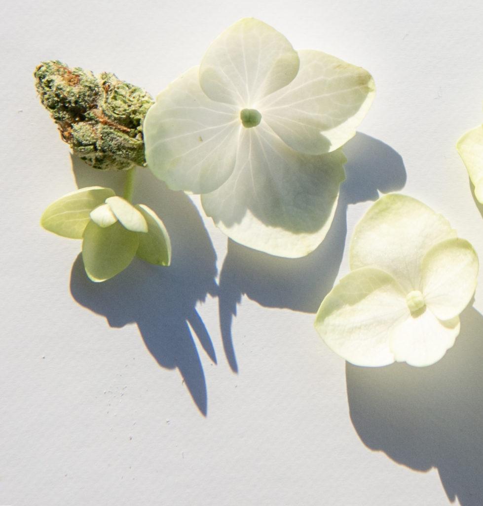 CBD Terpenes Floral