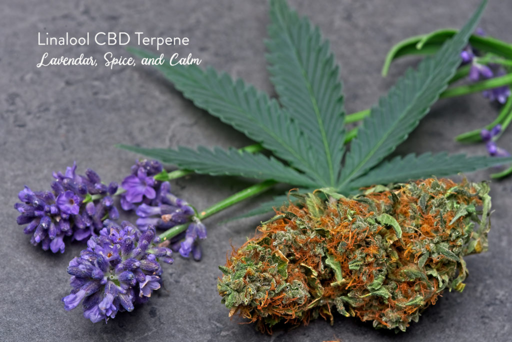 CBD Terpenes - Linalool