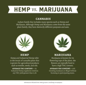 Hemp Buds for Sale