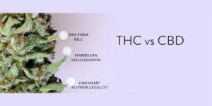 THC vs CBD Image