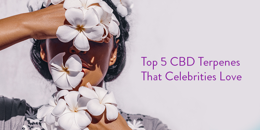 Top CBD Terpenes