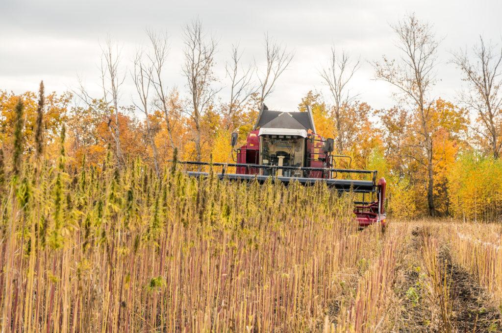Berkshire CBD Harvest Industrial Example