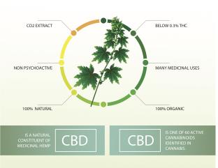 CBD Hemp Buds for Sale Diagram