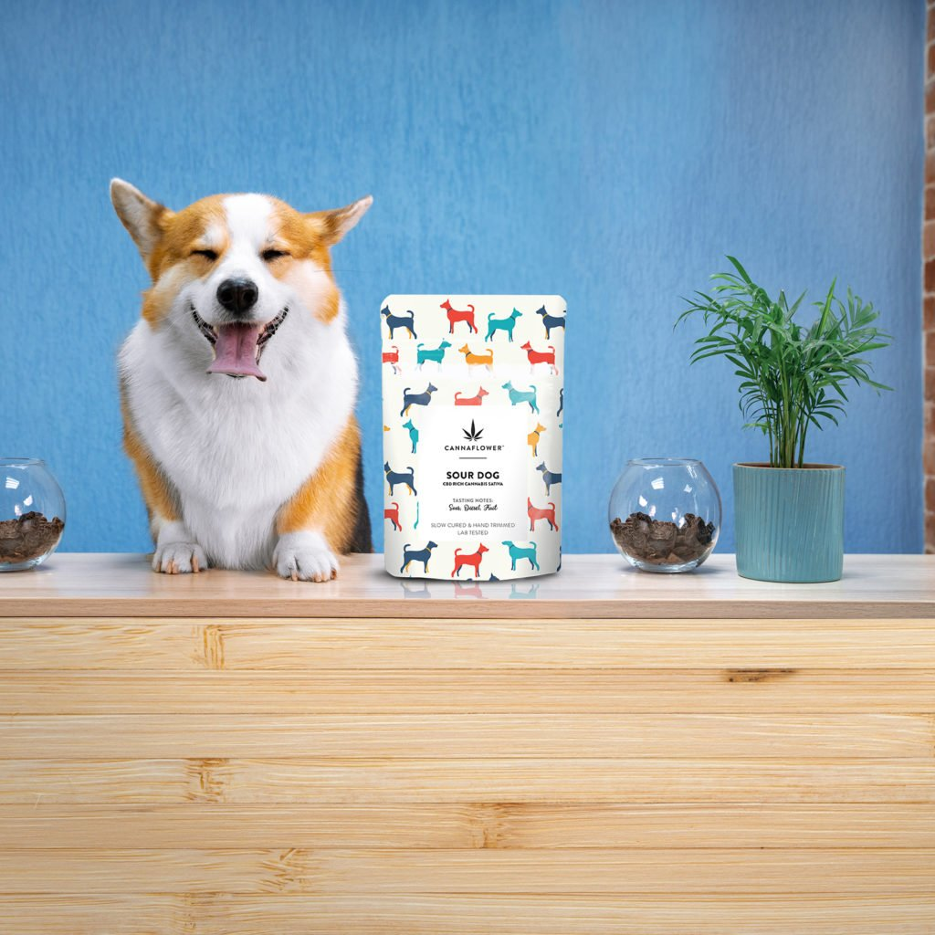 Cannaflower™ Sour Dog Lifestyle