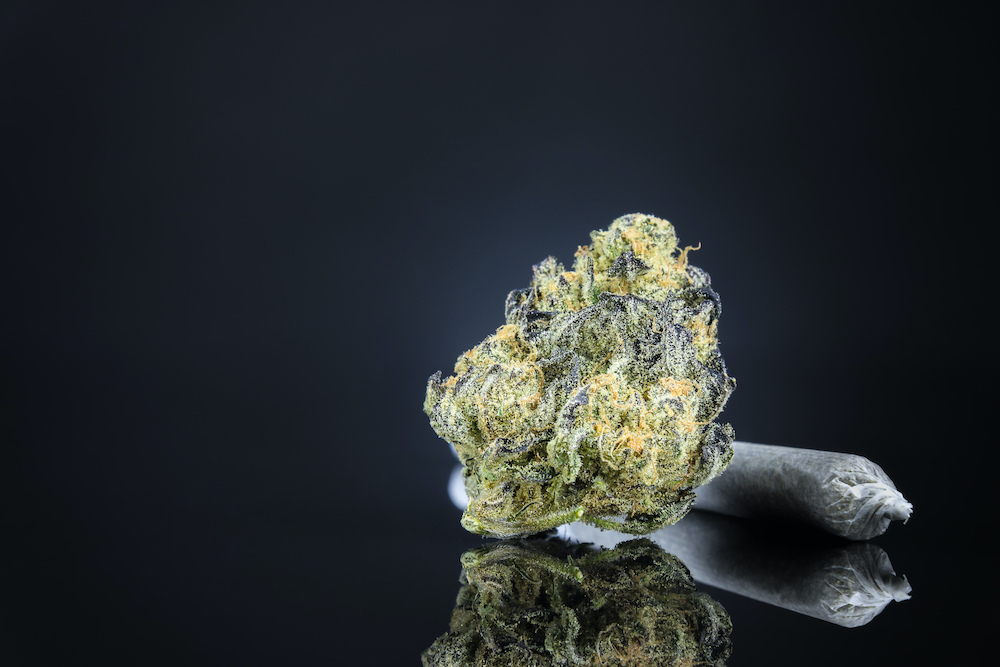 Premium CBD hemp flower featured