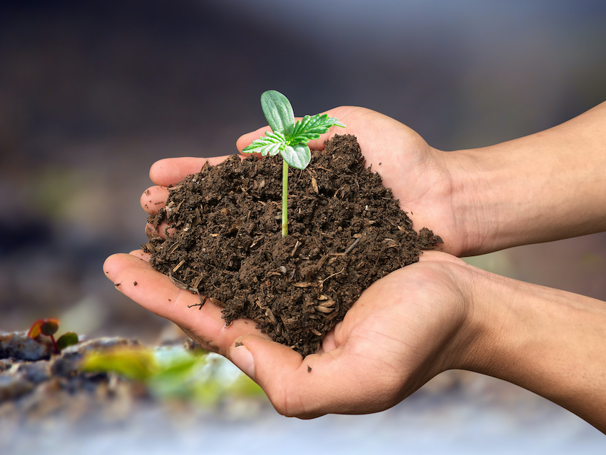 Super soil organic cannabis