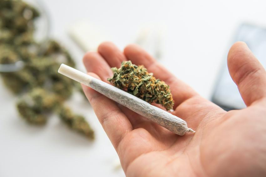 Surge in Cannabis Hemp