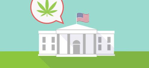 CBD In The Capital City – Is CBD Hemp Flower Legal In Washington, DC?