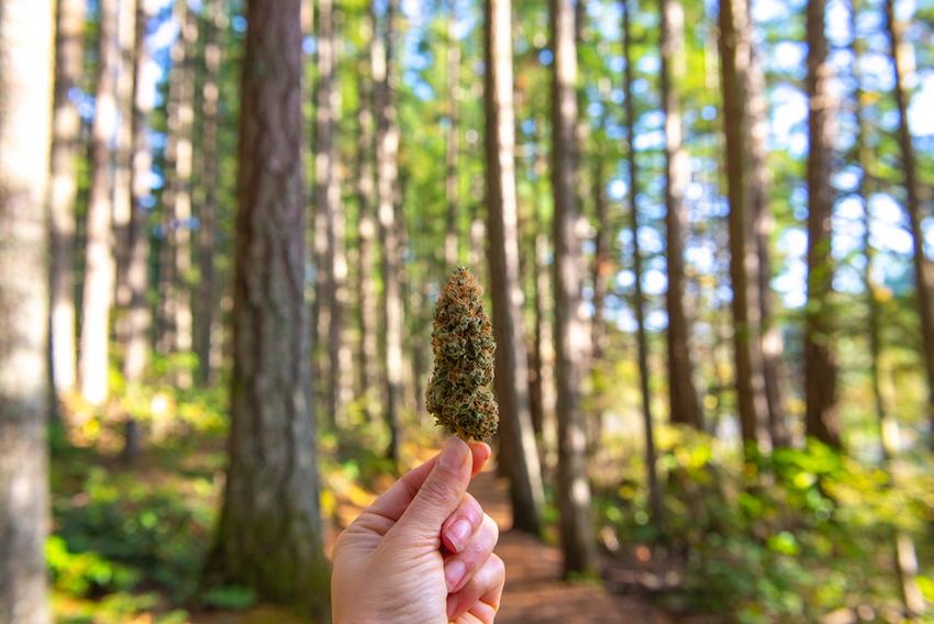 Is It Legal To Smoke CBD Hemp Flower In California?