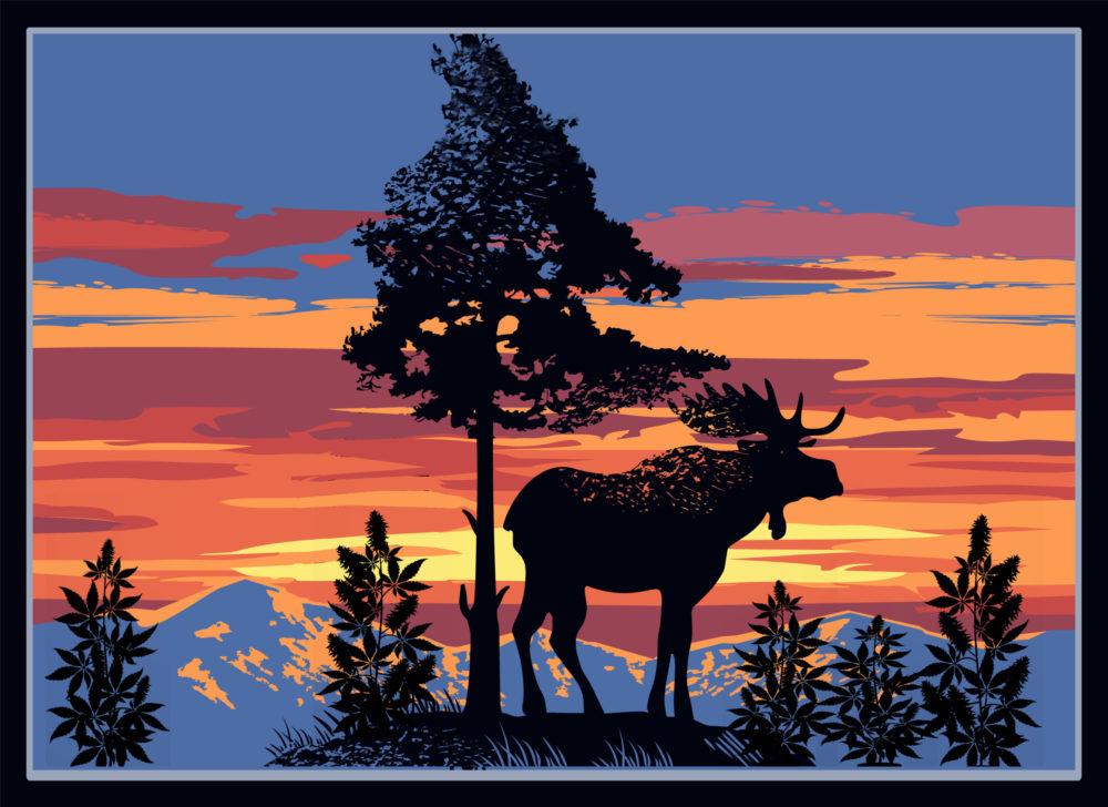Mountains, Moose, And Marijuana — Maine CBD Hemp Flower Legality